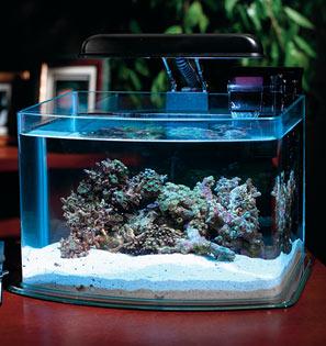Домашние аквариумы